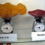 They weigh the same but 5 pounds of muscle takes up much less space then an equal pound amount of body fat.